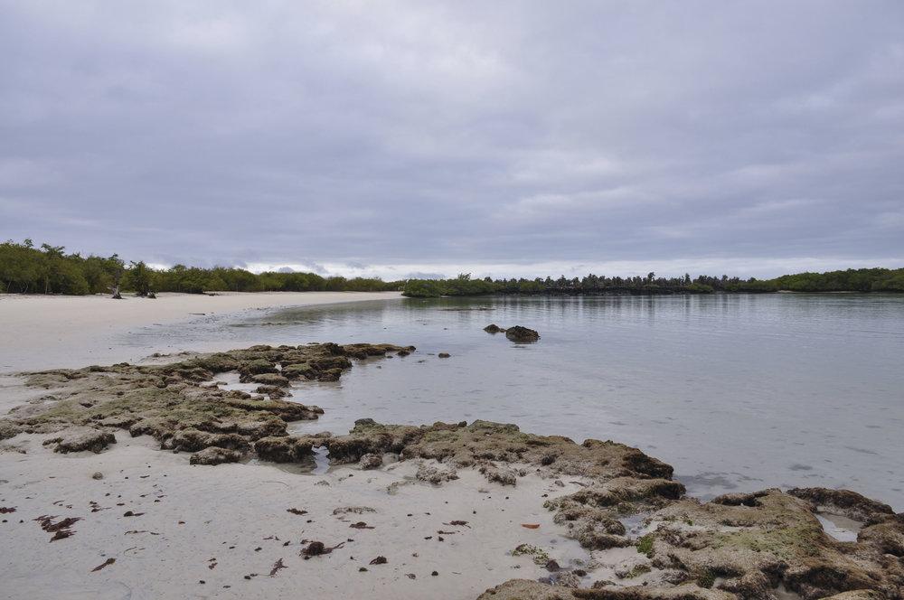 Tortuga Bay Galapagos Day 3 edited 2.jpg