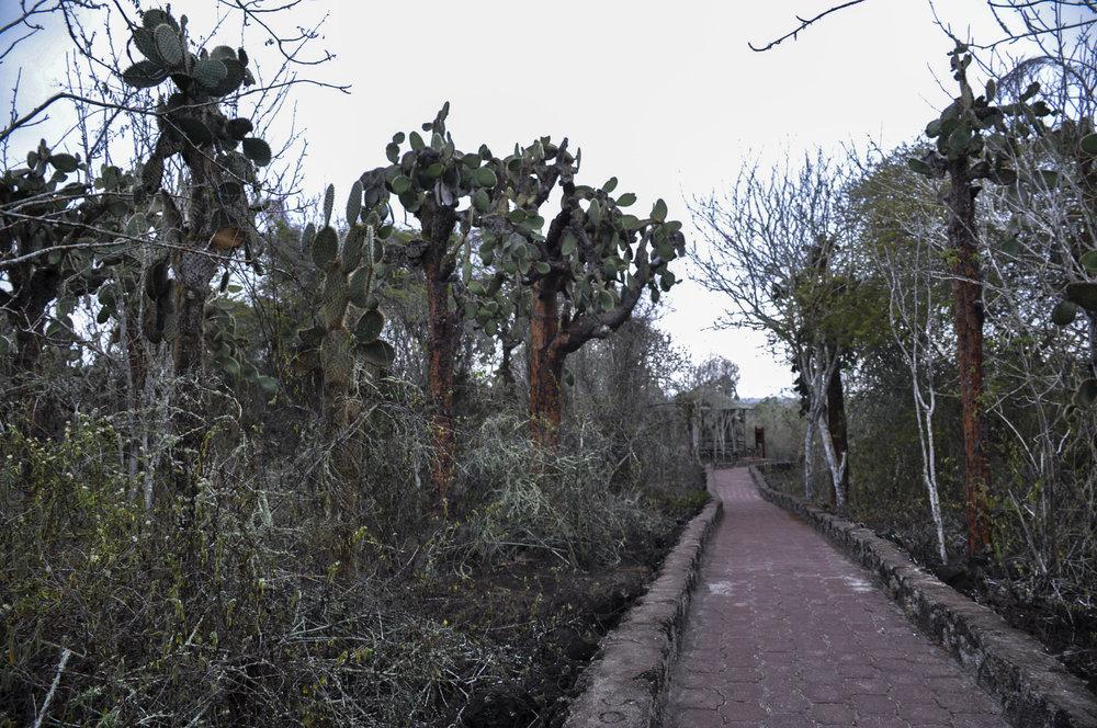 Tortuga Bay walkway edited.jpg