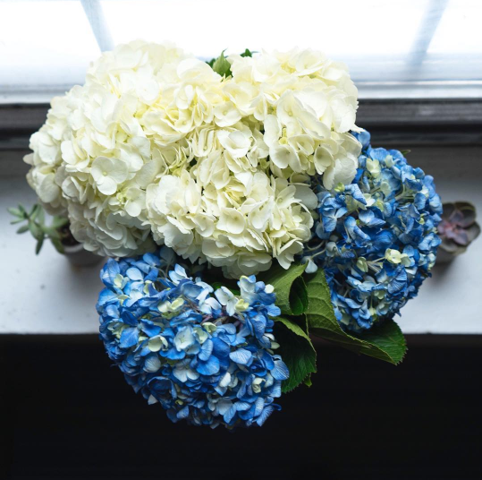 Resolution 11: Surprise yourself with flowers, because you're worth it.