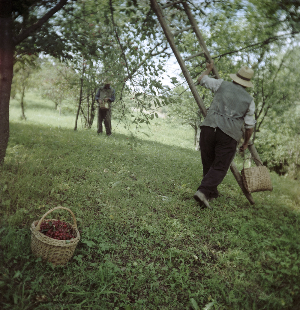 Orchard (Siklód, Romania, 2005)