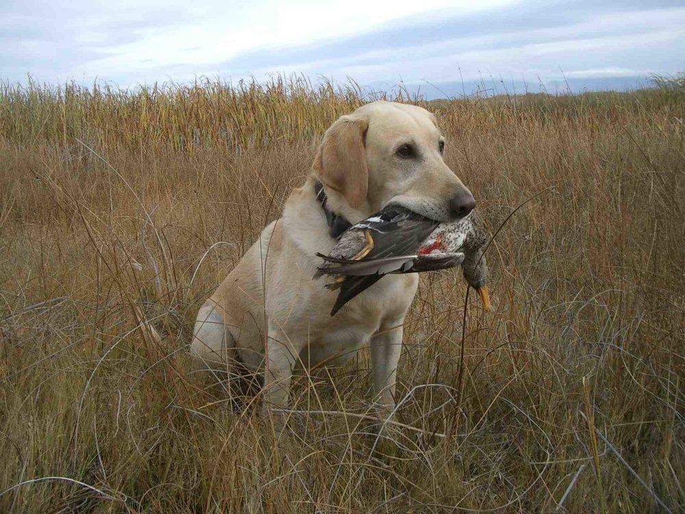 DOG NAME Bobbie OWNER HANDLER Ron Kathy Moorhead Of Ogallala NE