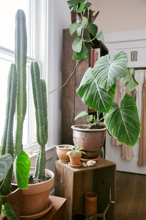 Bohemian Interiors | Indoor Plants | www.foundandkept.com