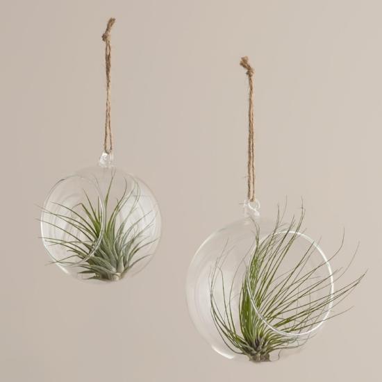 World Market | $7 | who doesn't still love a good hanging terrarium