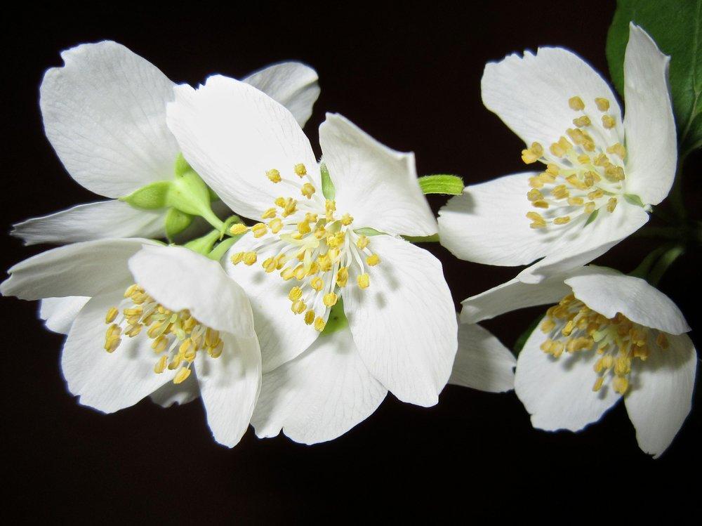 flower-363278_1920.jpg