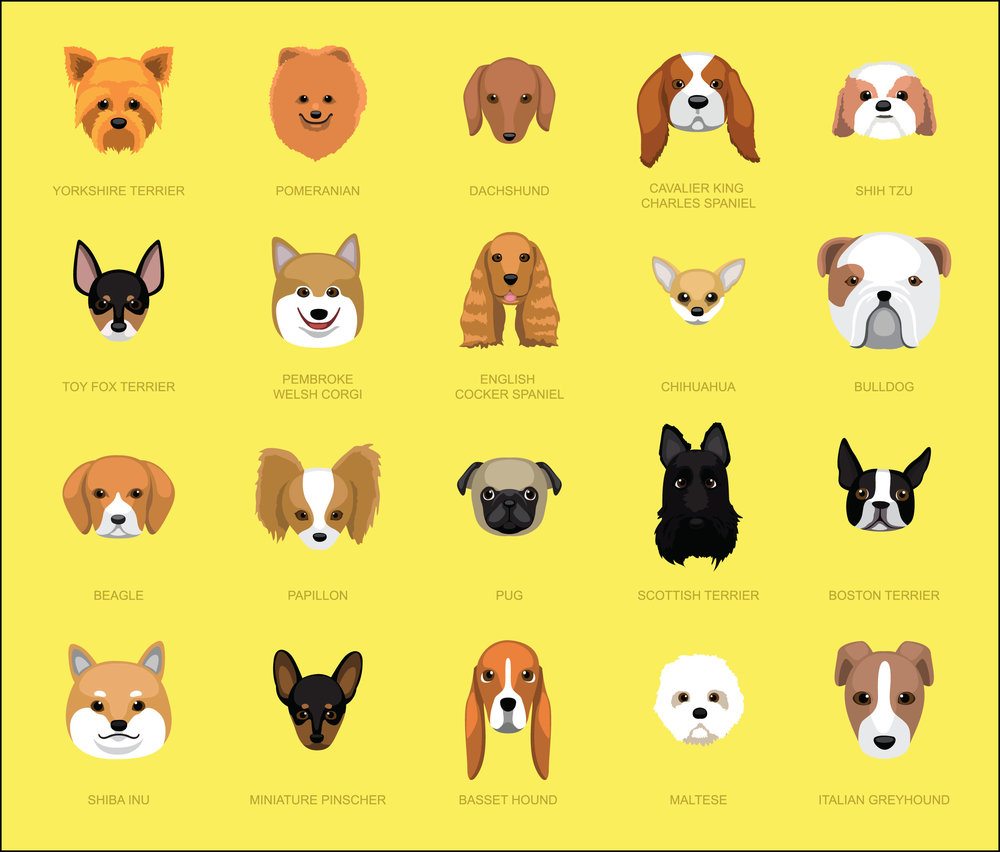 Dog Breeds [Page 1]