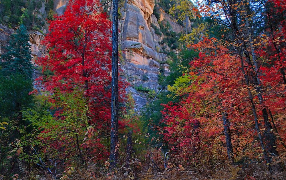 oak-creek-trail-sedona.jpg