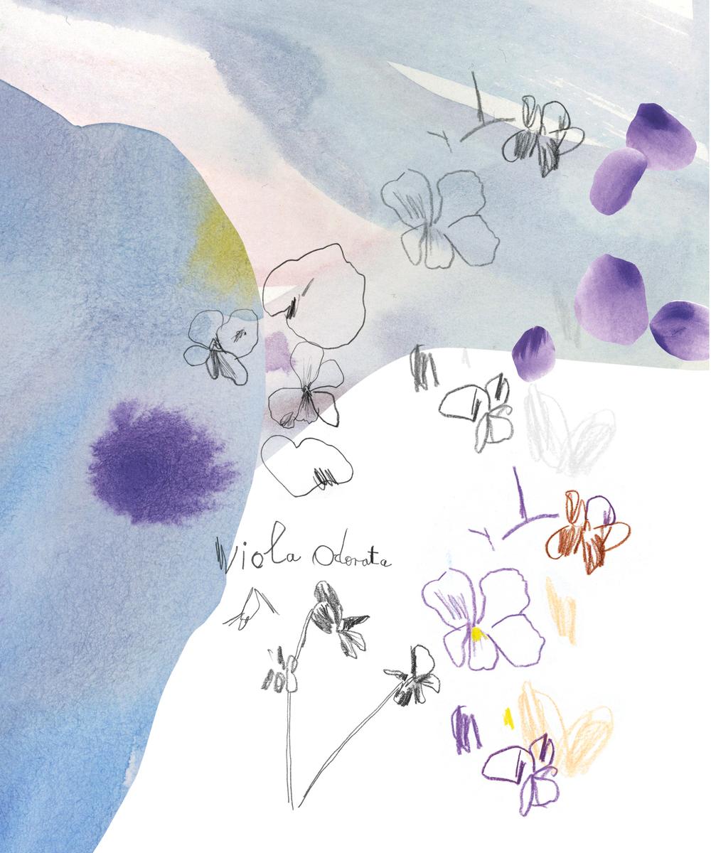 violica1.jpg