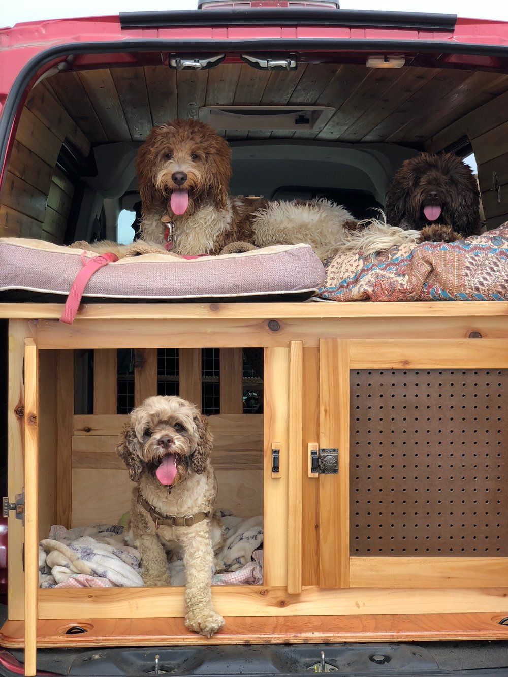 Wally, Roger & Xander being safely loaded in the adventure van.