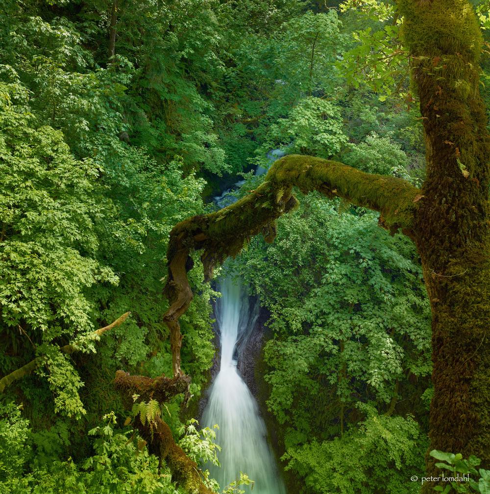 Columbia River Gorge 2, OR Alpa TC•IQ140•SK35XL