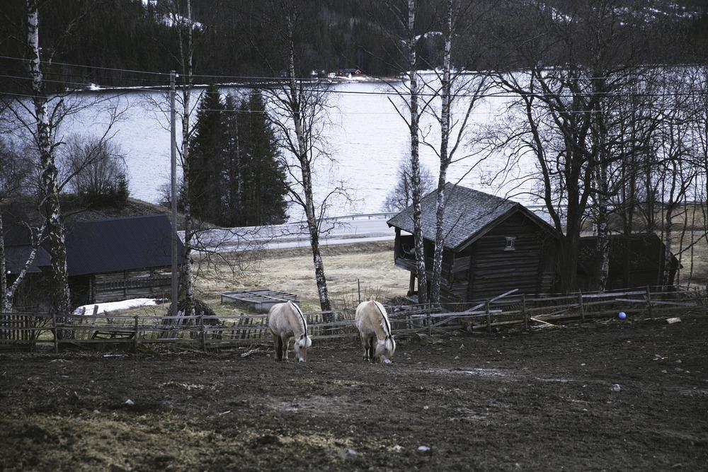Fjordinger.jpg
