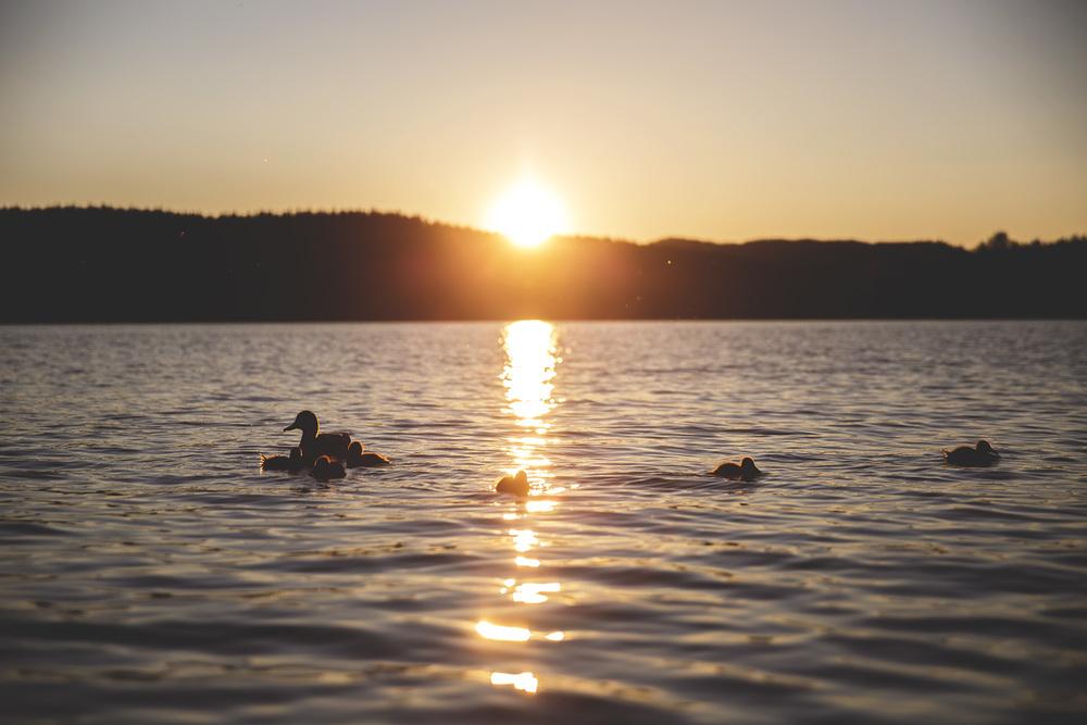 ender i solnedgang.jpg