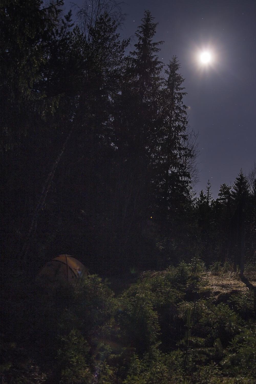MÅNELYS:  En stjerneklar natt bader skogen i månelys.  Strålene trenger seg så vidt mellom tretoppene og frem til teltduken: