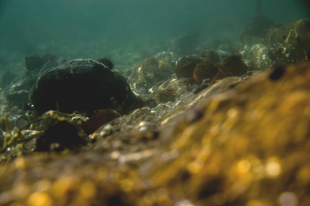 under vann.jpg