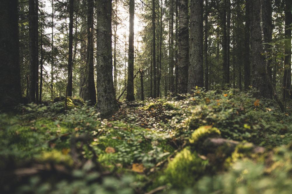 skog-1.jpg