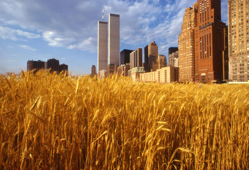 Wheatfield, Battery Park City--A Confrontation