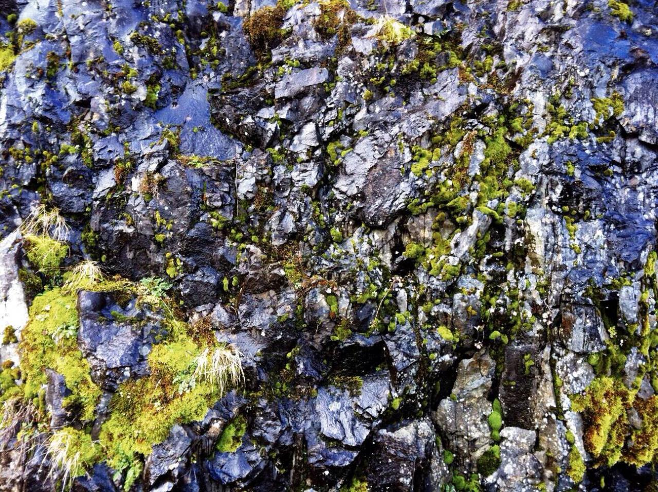 #Moss #EasternOregon