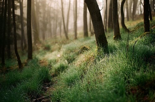 Can't you just imagine walking barefoot through this magnificent dewy forest? Mmmmm :]