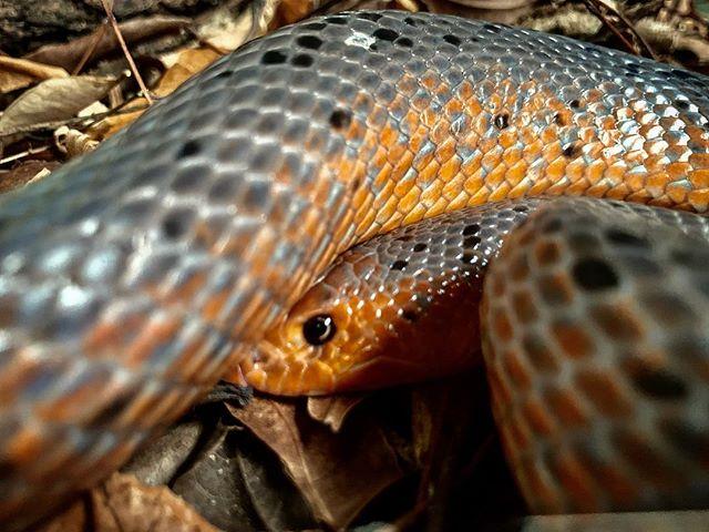 Bio-ken Snake Reserve / Kenya