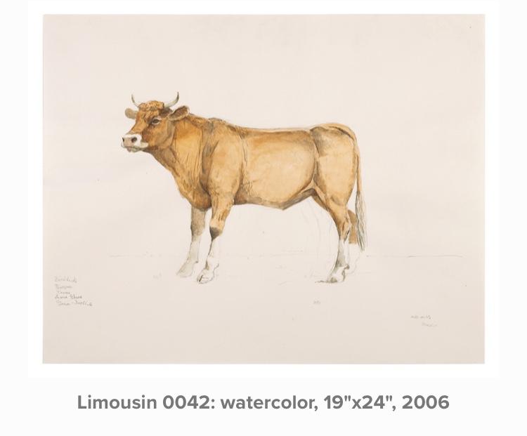 Limousin 0042