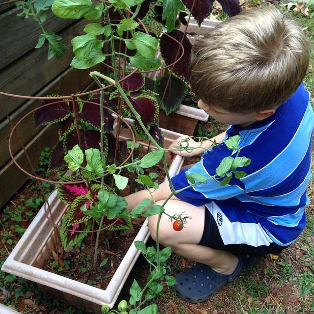 Carter's Garden