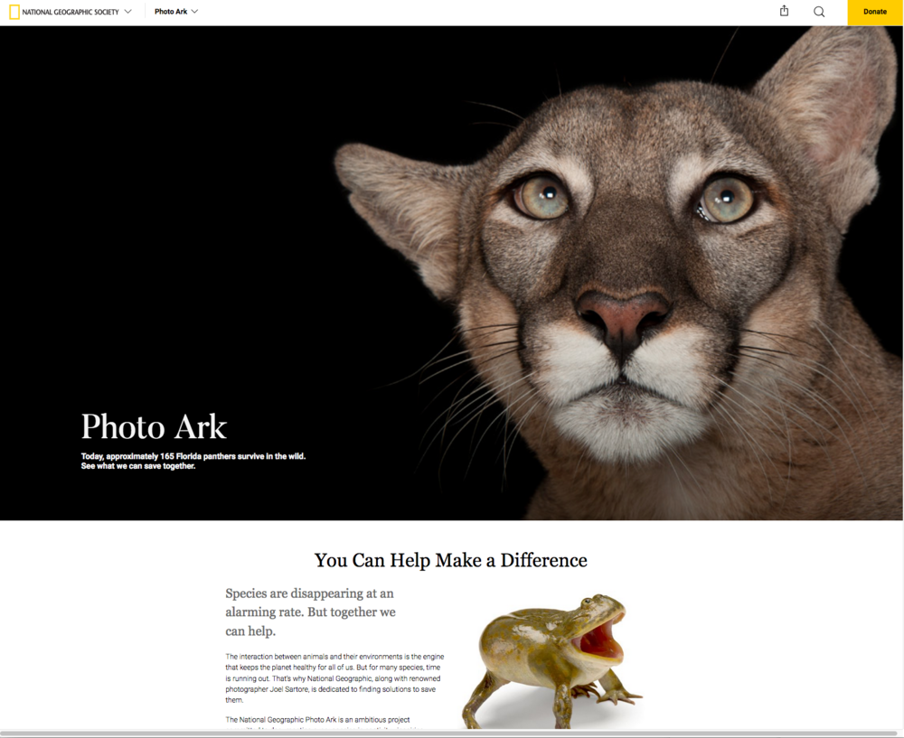Image of: Grizzly national Geographic Joel Sartore Photographs Alex Strachan The Photo Ark Critically Endangered Species Last Stand