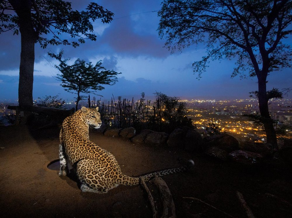 ©Steve Winter, National Geographic/NatGeo Wild