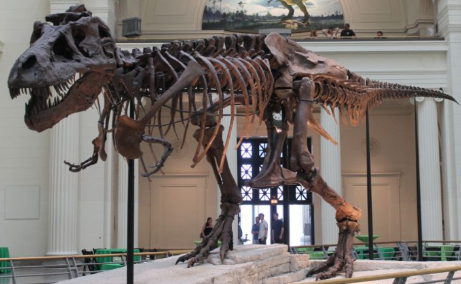 ©Field Museum, Chicago