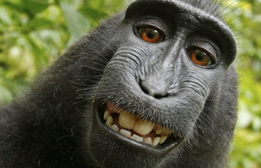 ©David Slater. Or Naruto the monkey. Not sure which.