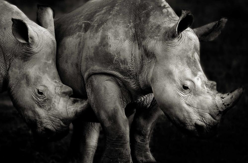©Remembering Rhinos/Piper Mckay