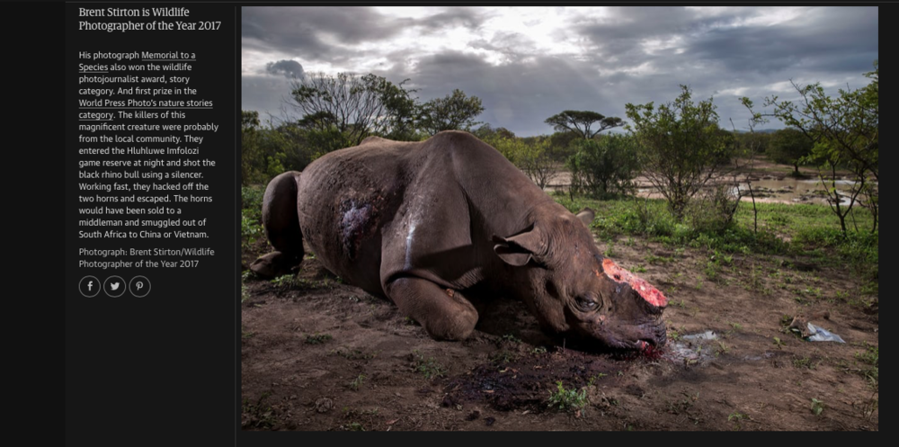 ©Brent Stirton.png