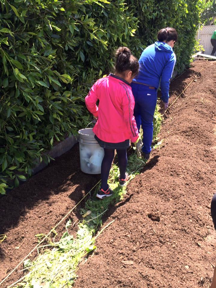 White House farm row mulch Apr 17.jpg