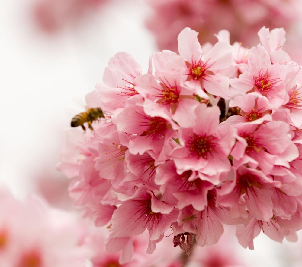 just-bee.jpg