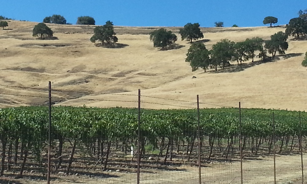 The Tanner Vineyards