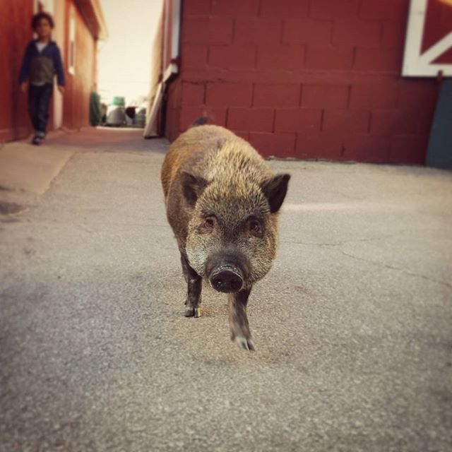 We have the best customers! #oink #pigsofinstagram #feedstore