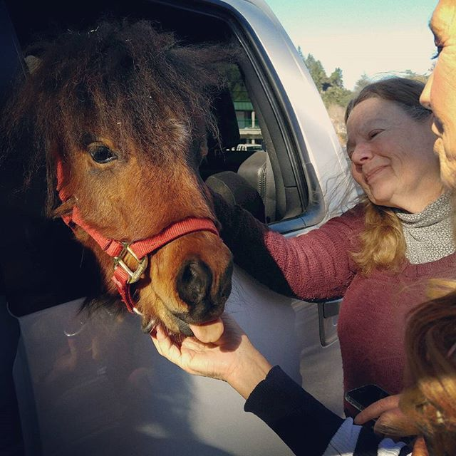 We have the BEST customers! Meet Titon. Photo by our own @linda_t.azevedo #pony #feedstore 🐎