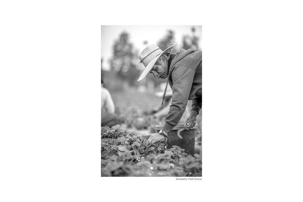 Jesus-Strawberry-Fields-Forever-Javier.jpg