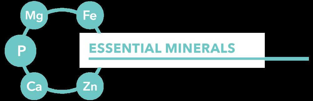 MINERALS-01.png