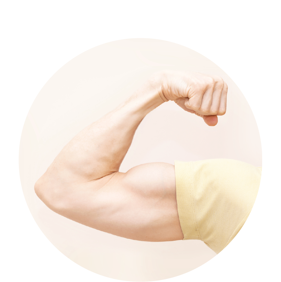 repairs muscle tissues -