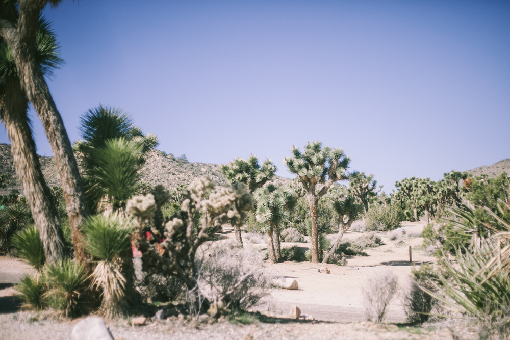 joshuatree-araliwest_21.jpg