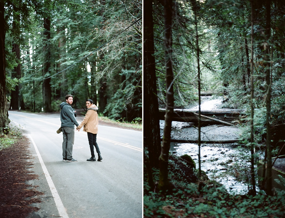 redwoods_photography.jpg