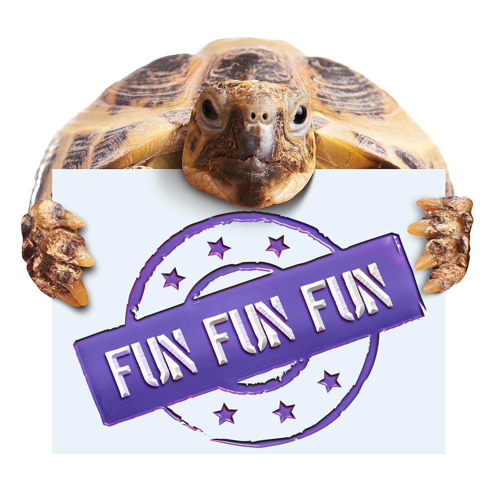 Turtlelogo.jpg