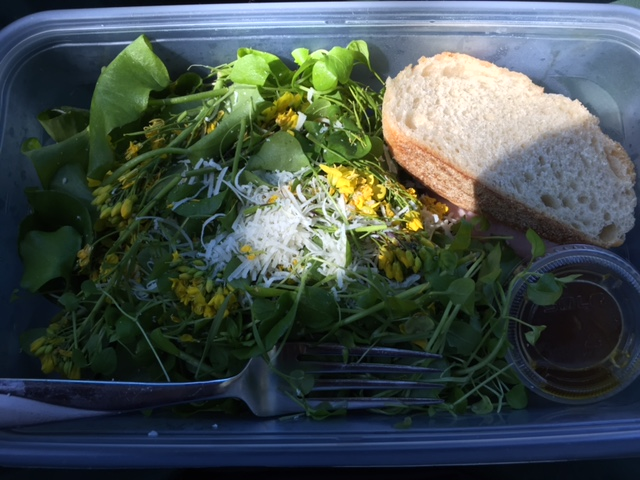 A forager's lunch on the go: miner's lettuce, chickweed, and mustard flowers.