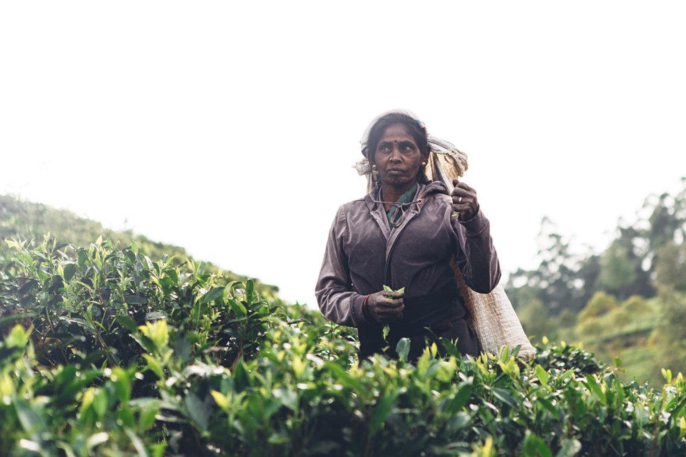 Frank & Nathalie Sri Lanka -29.jpg