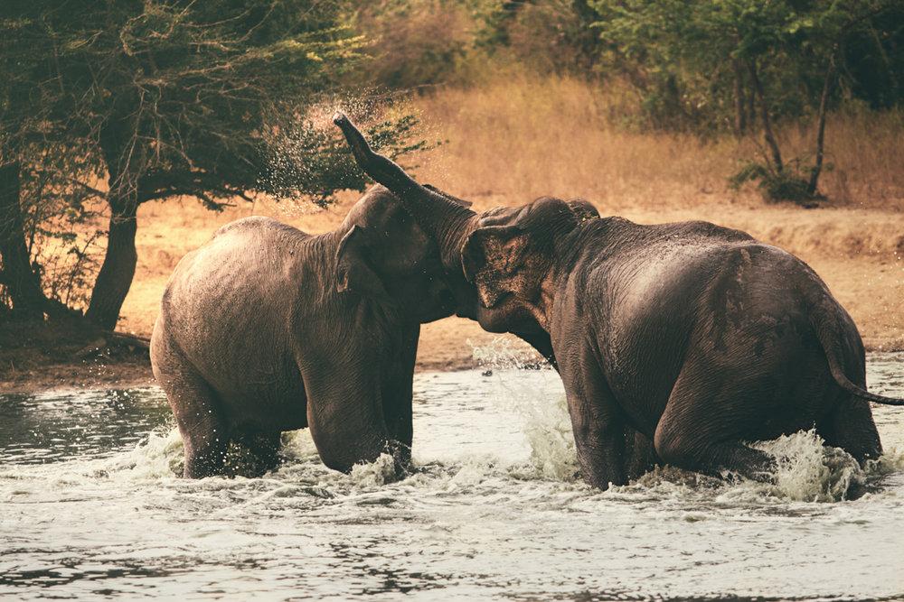 Frank & Nathalie Sri Lanka -49.jpg