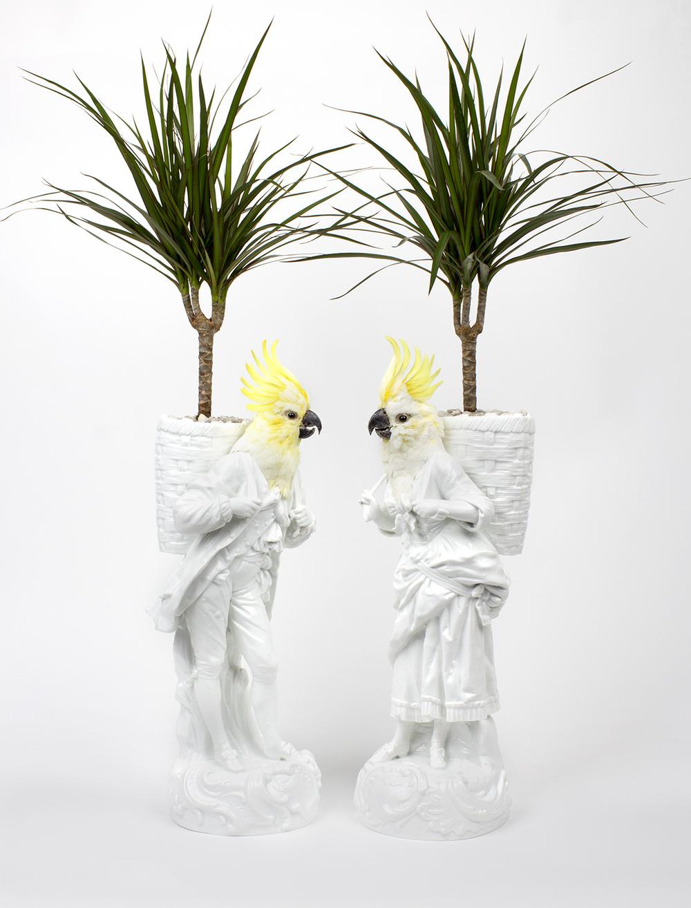 Les-deux-Garcons-palmbirds.jpg