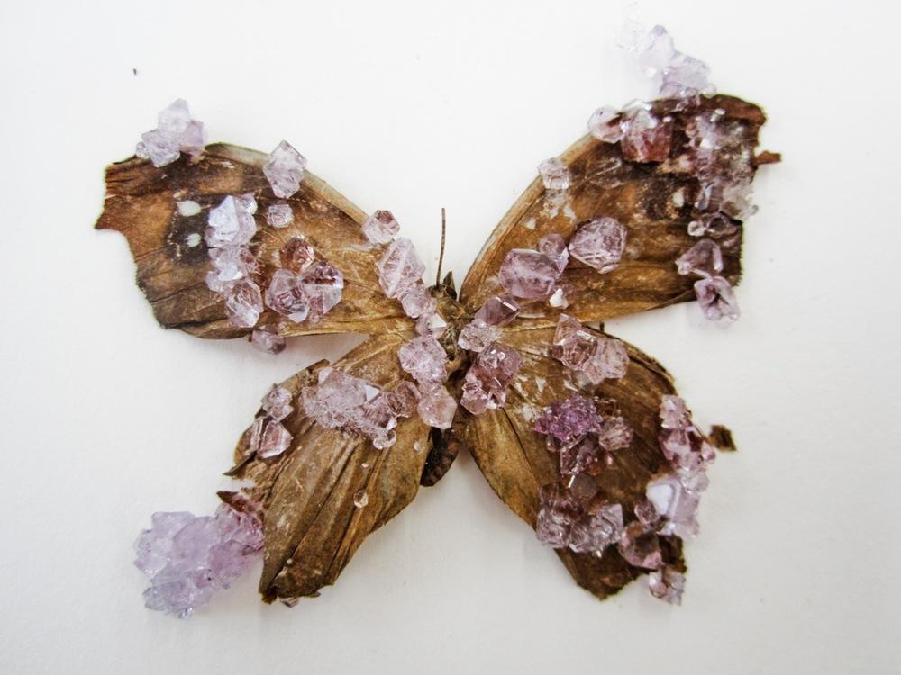 crystal growing - 2012