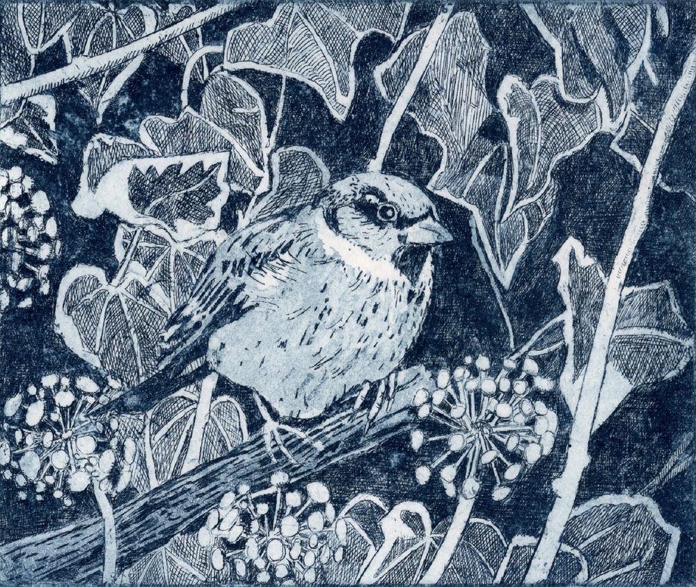 Sparrow   etching