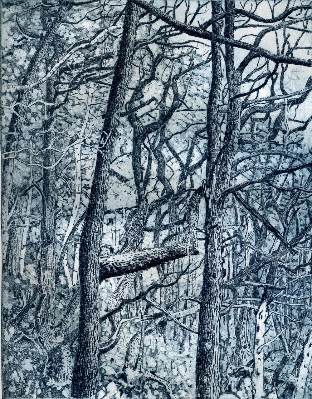 Tangled Wood   etching   19 x 25 cm   £110 (unframed)