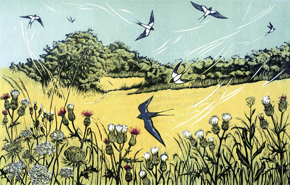 Bayfield Swallows linocut 18 x 28 cm £150