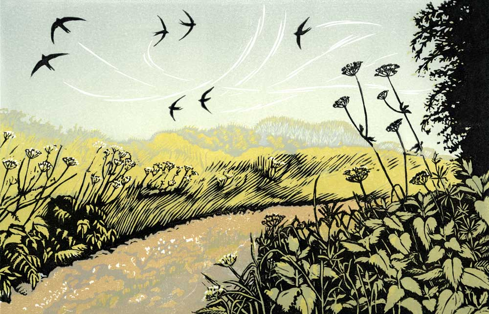 Summer Swifts   linocut   18 x 28 cm  Edition SOLD OUT